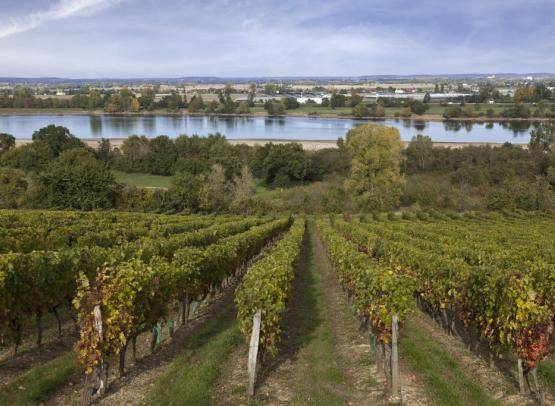 Vignoble de l Abbaye St Maur