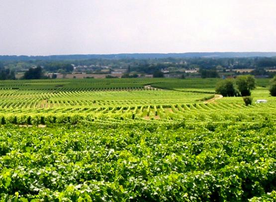 cave-vins-bourgueil-robert-marcel-vignobles-credit-2019
