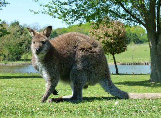 Jardin des Kangourous 2015 crédit A.Rosselin (4)