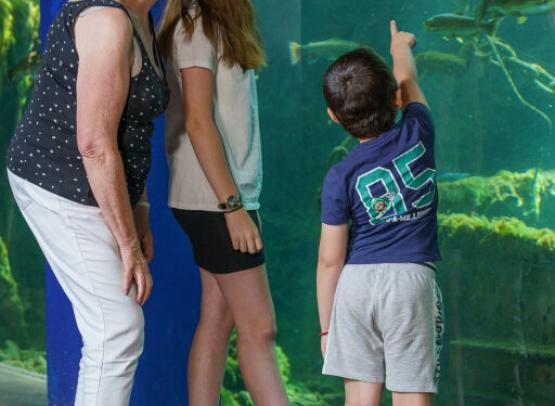 grand_aquarium_de_touraine (13)