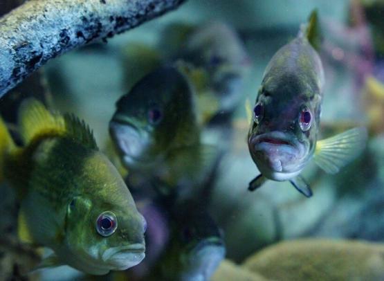 grand_aquarium_de_touraine (5)