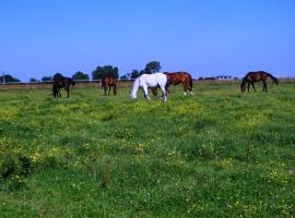 Centre equestre marcilly 1