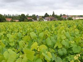 Domaine_viticole_Maretière_Tillieres