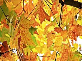 feuilles-automne-pixabay
