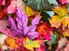 atelier-nature-feuilles-colorees-loir-et-cher-pixabay